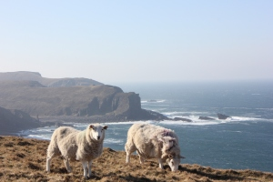 The sheep were more accustomed to the blustery conditions than us
