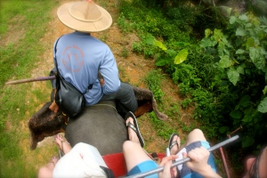 Riding an elephant!