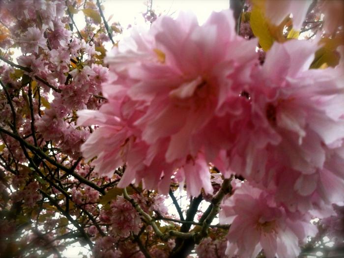 I friggin love blossom