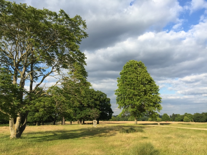 Richmond Park is a great place to play sport